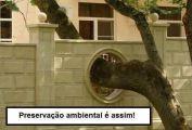 ÁrvorePreservada