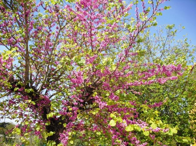 ÁrvoresESSb (16)